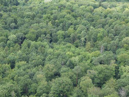 stuttgart: The Black Forest (Schwarzwald) near Stuttgart, Germany   Stock Photo