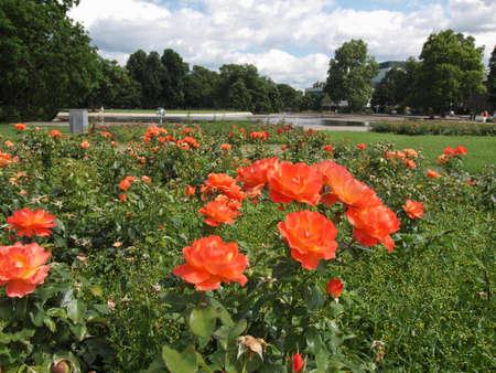 The Oberer Schlossgarten park in Stuttgart, Germany Stock Photo - 17483893