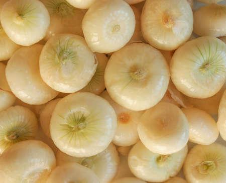 allium cepa: Onion (Allium cepa) also known as garden or bulb onion Stock Photo