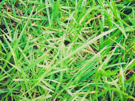 greem: Vintage looking A picture of Greem grass meadow weed background Stock Photo