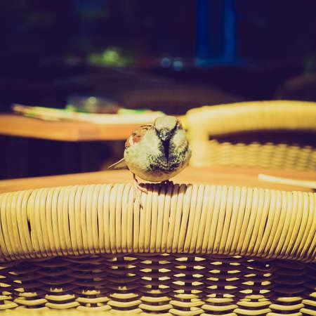 passerine: Vintage guardando Usignolo Luscinia megarhynchos rossiccio piccolo uccello passeriforme Archivio Fotografico