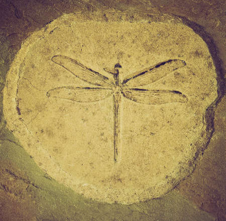 Vintage looking Dragonfly fossil of Stenophlebia Amphitrite from a Jurassic Lake of 150 million years ago