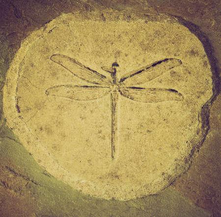 Vintage zoek Dragonfly fossiel van Stenophlebia Amphitrite uit een Jurassic Lake van 150 miljoen jaar geleden Stockfoto