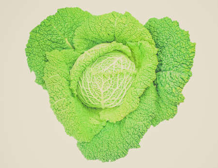 edible leaves: Vintage looking Cabbage leafy vegetable plant with edible leaves - isolated over white background Stock Photo