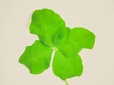 Vintage looking Four leaf clover shamrock, symbol of Ireland and luck photo