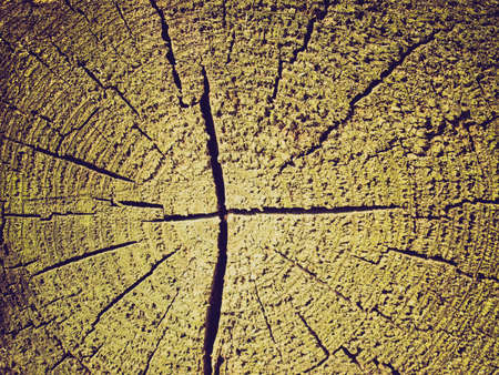 Vintage looking Detail of section of a tree trunk photo