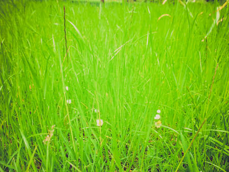 Vintage looking Green grass meadow lawn useful as a background