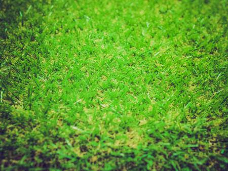 pasto sintetico: Vintage que mira la hierba sintética verde útil como backgroun