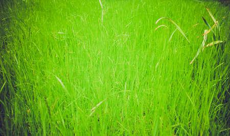 Vintage looking Green grass meadow lawn