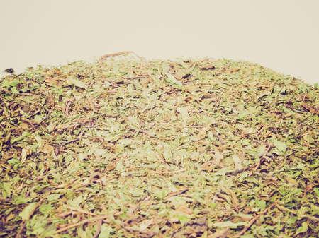 mentha: Detalle de �poca en busca de hojas secas de menta (Mentha piperita)