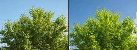 polarised: Effect of polarising filter on trees and sky to improve the appearance of landscapes - Sky is bluer and leaves are greener - Without filter on the left - With filter on the right