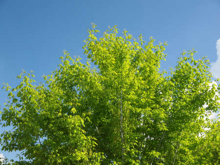 polarised: Effect of polarising filter on trees and sky to improve the appearance of landscapes - The sky is bluer and the leaves are greener