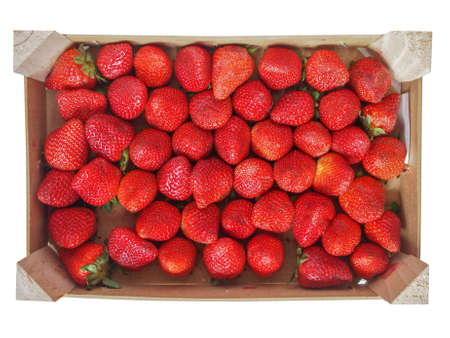 Strawberry fruit aka garden strawberry or fragaria in a fruit crate isolated over white background