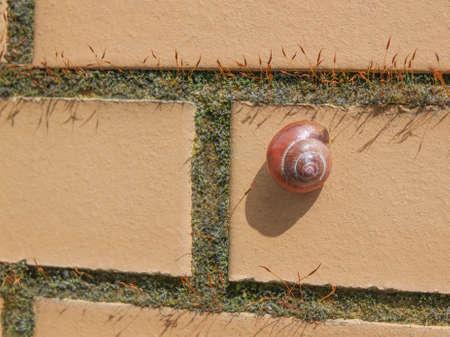 mollusc: Slug snail  terrestrial gastropod mollusc animal on a wall