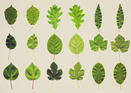 Vintage retro looking Tree leaves collage - isolated over white background - front and back photo