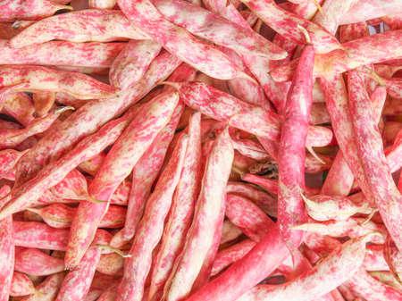 roman beans: Cranberry variety of common beans aka Crimson bean or Borlotti bean or Roman bean