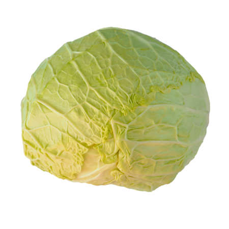 edible leaves: Cabbage leafy vegetable plant with edible leaves isolated over white