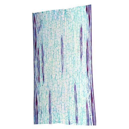 micrograph: Light photomicrograph of Corn stem longitudinal section seen through microscope