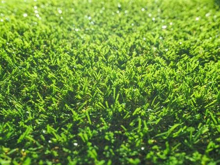 Groene kunstgrasweide nuttig als achtergrond Stockfoto