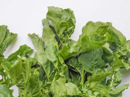 roquette: Eruca sativa aka salad rocket, rucola, rucoli, rugula, colewort, roquette Stock Photo