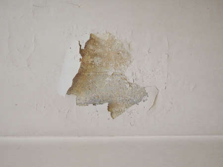 dankness: Damage caused by damp and moisture on a wall