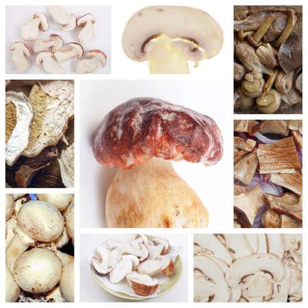champignons: Vegetarian food collage: mushrooms including porcini and champignons