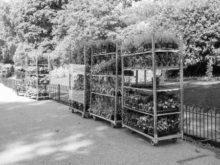 occurs: LONDON, UK - JUNE 11, 2015: Gardening works in St James Park occurs in every spring to plant new flowers in black and white Editorial