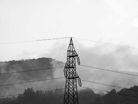 inspiring: Sublime awe inspiring nature with transmission line in stormy weather with birds on a wire in black and white