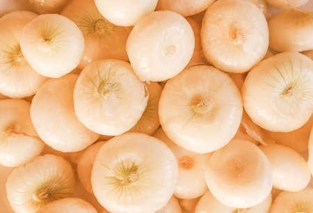 cebolla blanca: Vintage Cebolla mirando (Allium cepa), también conocido como jardín o cebolla de bulbo