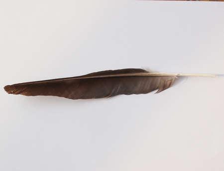 corvidae: Feather of black Crow (Corvus of family Corvidae) bird
