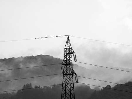 sublime: Sublime awe inspiring nature with transmission line in stormy weather in black and white