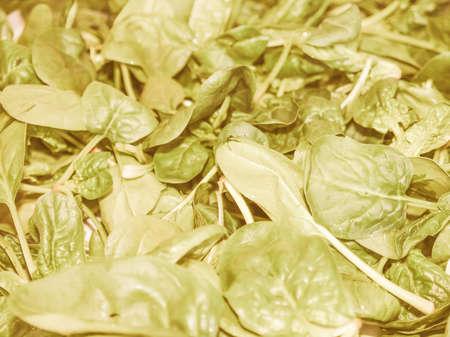edible plant: Vintage looking Green spinach leaves edible flowering plant vegetarian food