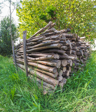 piled: Tree logs piled up in a meadow