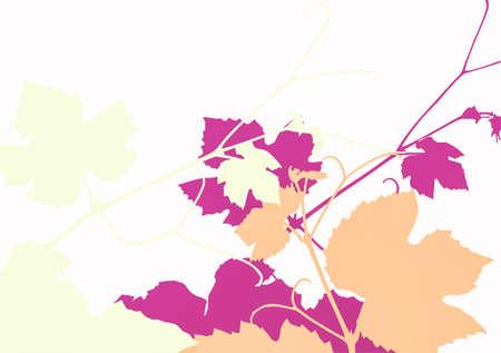 vitis: Vector illustration of grape vine leaves