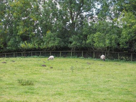 arden: English countryside in Tanworth in Arden Warwickshire, UK