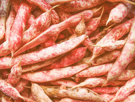 roman beans: Vintage looking Cranberry variety of common beans aka Crimson bean or Borlotti bean or Roman bean Stock Photo