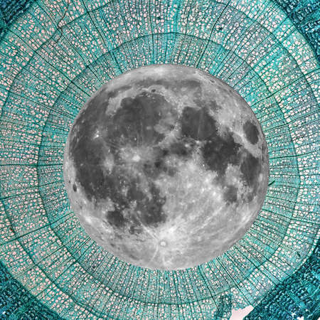 photomicrograph: The universe, very small to very large: collage of light photomicrograph of tilia stem seen with a microscope and full moon seen with a telescope (I am the author of both photos, no NASA images used)