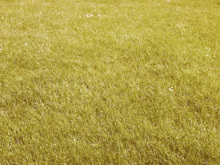 Hintergrund: Vintage looking Green grass meadow lawn useful as a background