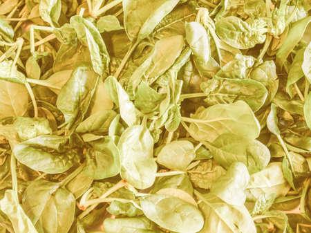 edible leaves: Vintage looking Green spinach leaves edible flowering plant vegetarian food
