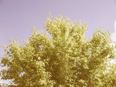 bluer: Effect of polarising filter on trees and sky to improve the appearance of landscapes - The sky is bluer and the leaves are greener vintage