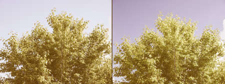 polarised: Effect of polarising filter on trees and sky to improve the appearance of landscapes - Sky is bluer and leaves are greener - Without filter on the left - With filter on the right vintage Stock Photo