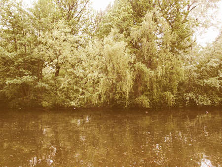 salix: Vintage looking A Weeping Willow (Salix) plant by a water pond