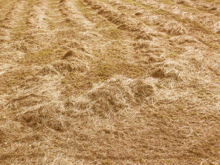 cut grass: Vintage looking Cut grass hay in a meadow field