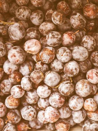ciruela pasa: Detalle de la vendimia en busca de frutos de ciruela - comida vegetariana saludable - útil como fondo