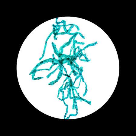 seen: Light photomicrograph of Spirogyra whole mount seen through microscope