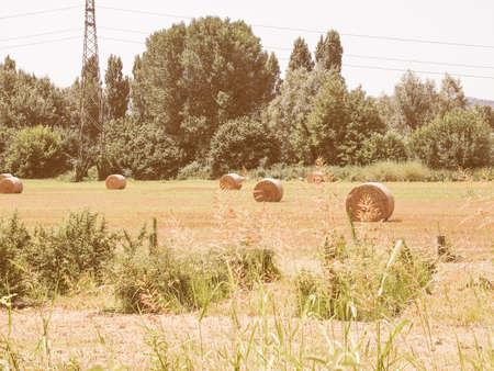 hay bales: Vintage looking Round hay bales in a field