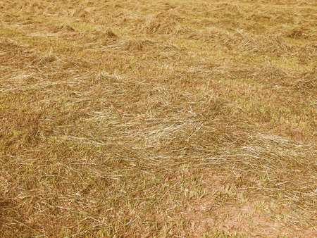 cut the grass: Vintage looking Cut grass hay in a meadow field