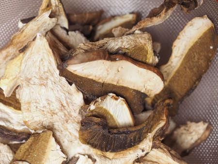 cep: Boletus edulis aka penny bun or porcino or cep mushrooms