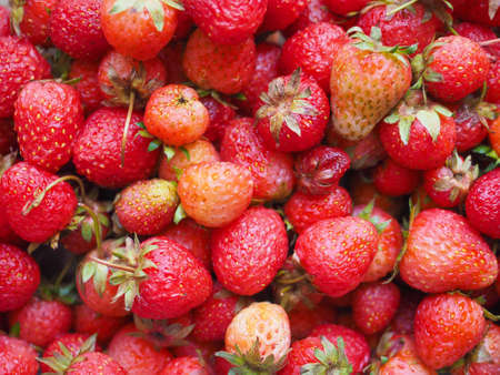 fragaria: Strawberry (Fragaria x ananassa) fruit vegetarian food
