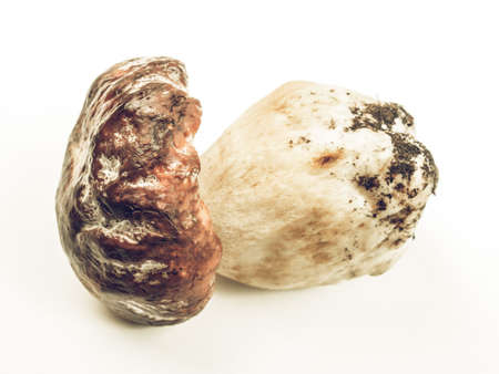 cep: Vintage desaturated Boletus edulis aka penny bun or porcino or cep Stock Photo